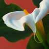 """Tilted Lily""  (Original photograph by WB Eckert, digital print)"