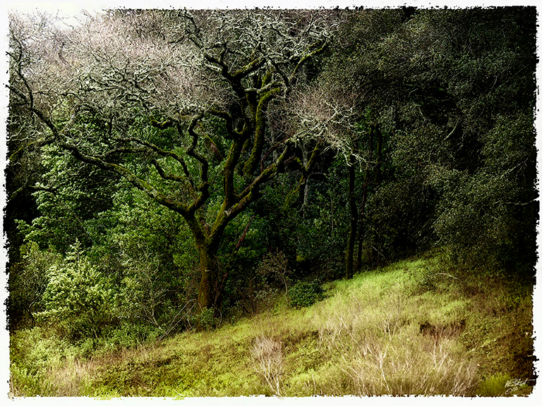"""Oak Grove in the Rain"" (Original photograph by WB Eckert, digital print)"