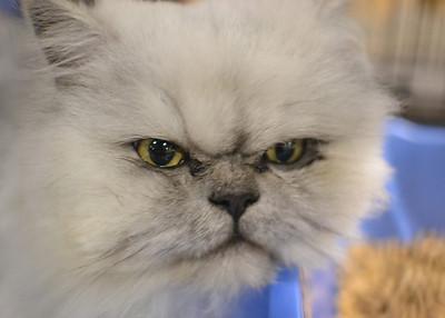 Cat Show -- Nov 2012