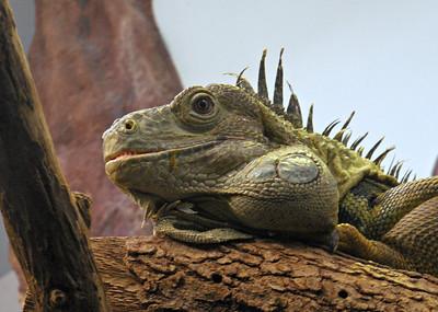 Micke Grove Zoo + Garden - July 2013