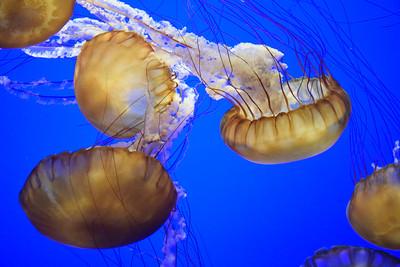 Monterey Bay Aquarium - Dec 2014