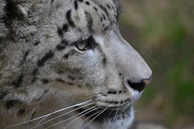 Sacramento Zoo -- Jan 2014