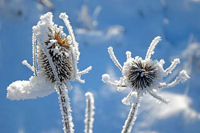Freezing January Morn - Jan 2017