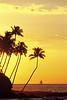"""""""Kona Gold"""" / Hawaii"""