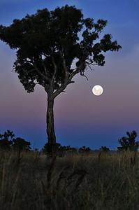 """""""Outback Moon"""" / Australia"""
