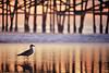 """One Bird's Paradise"" / San Clemente Pier"