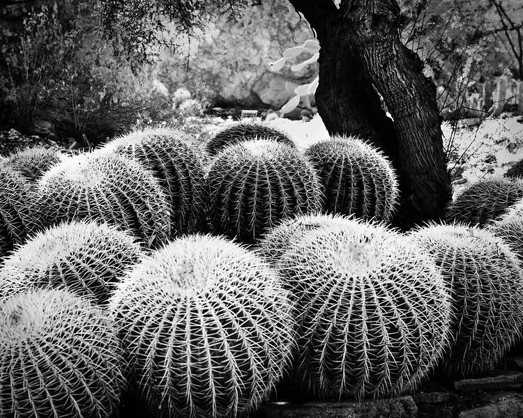 Boyce Thompson Arboretum, Superior, Arizona, USA