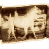 White Stallion, 2001<br /> Photographic Emulsion Transfer Collage