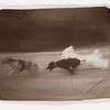 Dogs' Play, 2002<br /> Photographic Emulsion Transfer