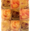 Roses, 2004<br /> Photographic Emulsion Transfer Collage