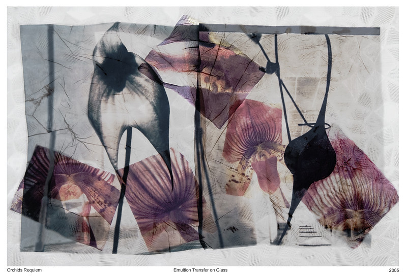 Orchids Requiem, 2005<br /> Photographic Emulsion Transfer Collage on Glass