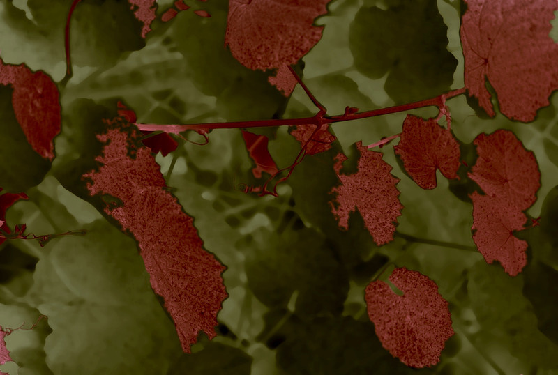 Leaves, 1992<br /> Special Film and Digital Collage
