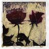 Roses, 1993<br /> Polaroid Manipulation