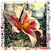Lili, 1998<br /> Polaroid Manipulation