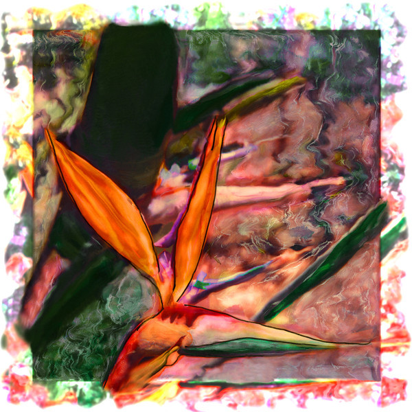 Bird of Paradise II, 1998<br /> Polaroid Manipulation