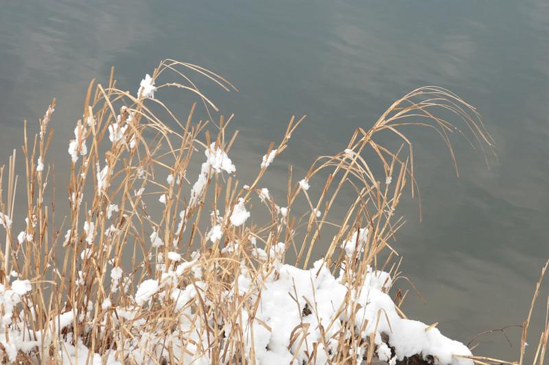 Frozen Fronds