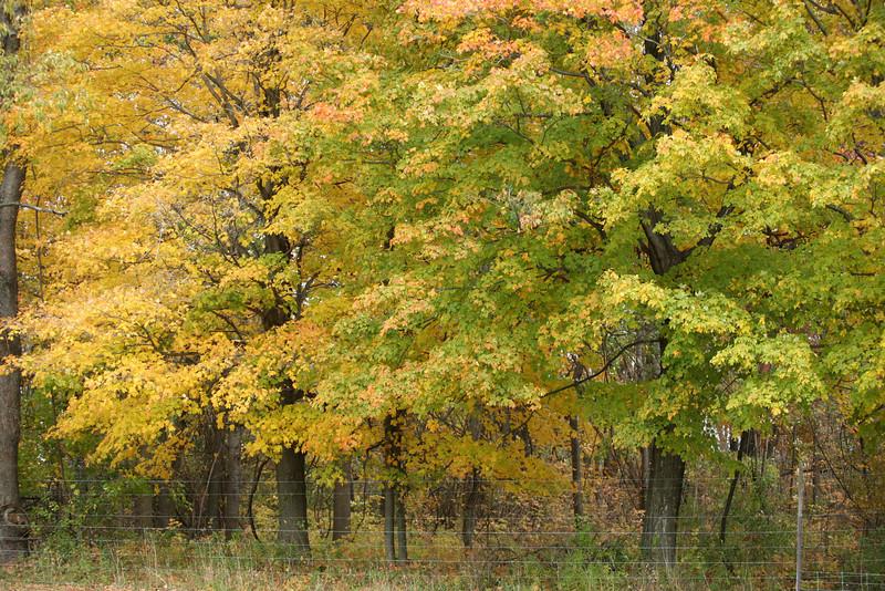 Autumn in Western NY