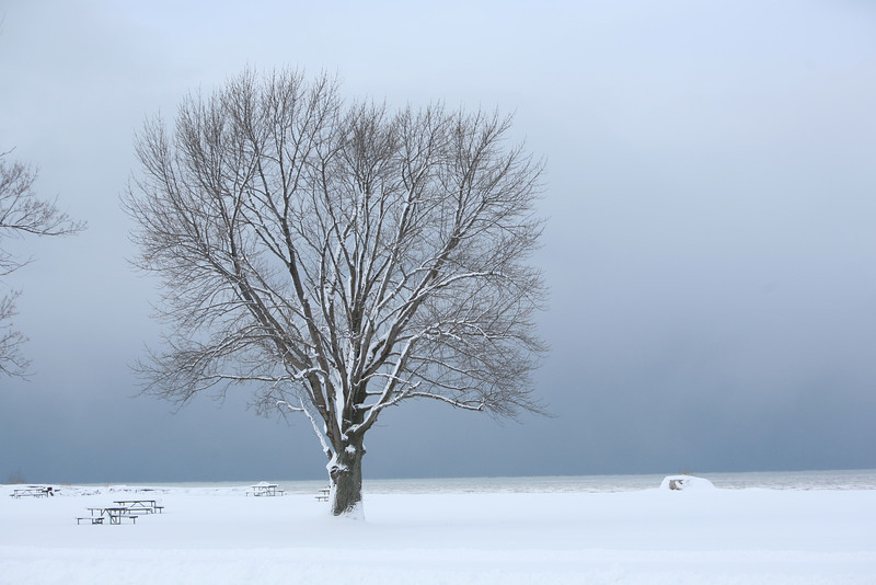 Tree on Lake Ontario