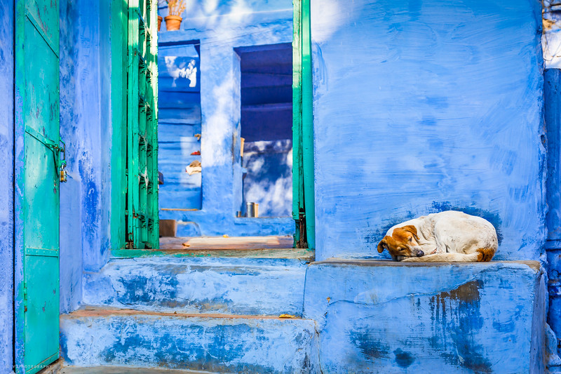 The Blue City, Jodhpur, Rajasthan 2014