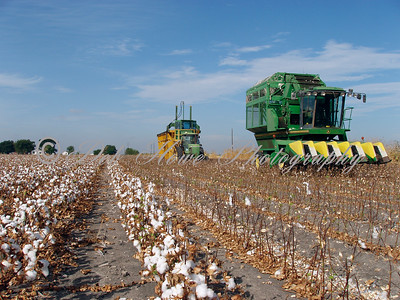 Cotton field with cotton picker and module.