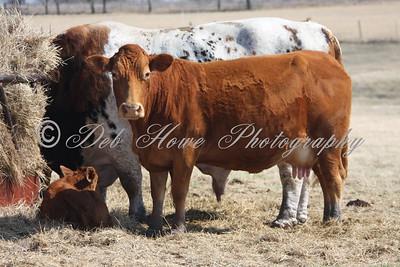 This one is Not a E-I-E-I-O Howe's farm animal.