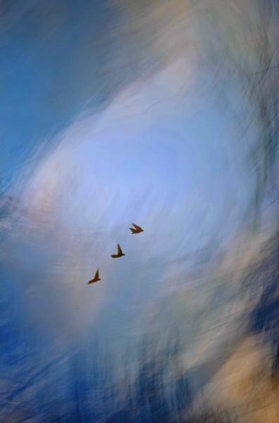 Tres Swallow