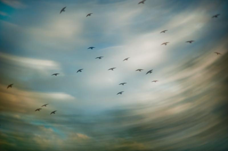Swallow Scouts 082613