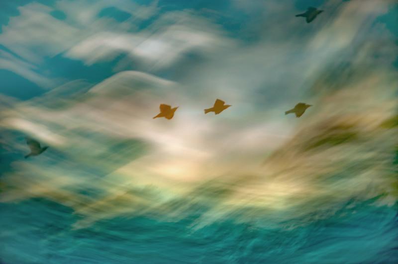 Five Redwings