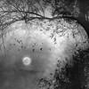 Moonfull