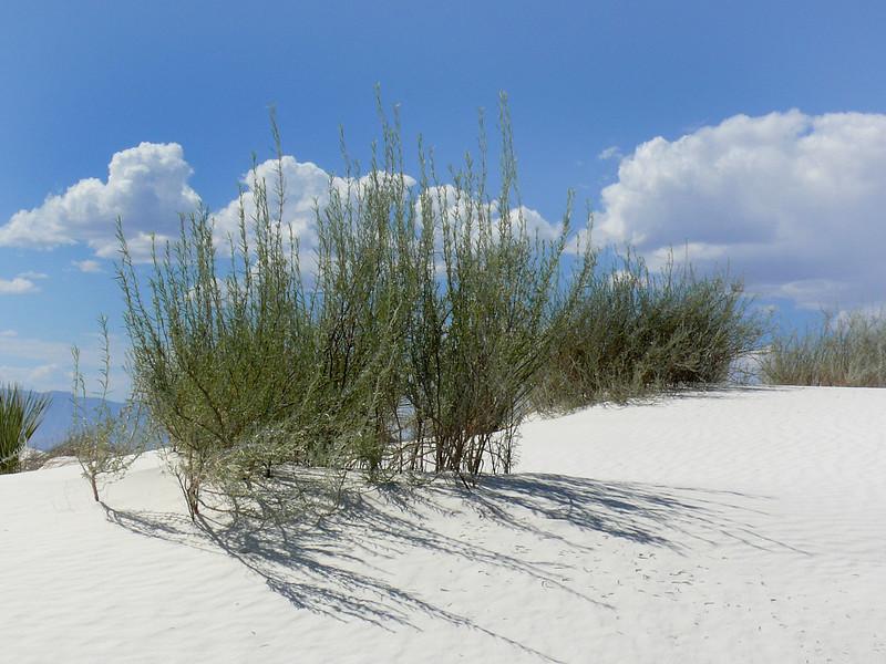 White Sands National Monument 1