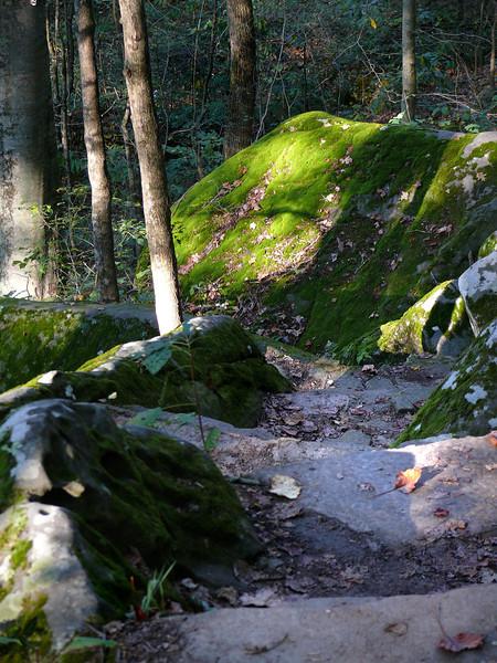 Garden Steps 3