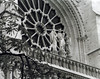 Rose Window, Notre Dame Cathedral