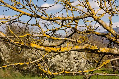 02_Tuscan Spring