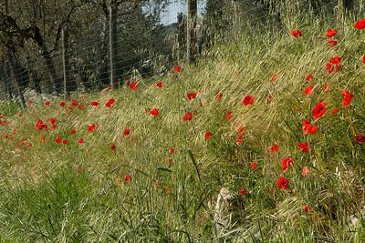 07_Tuscan Spring