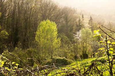 04_Tuscan Spring