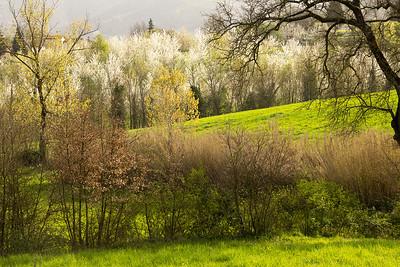 03_Tuscan Spring