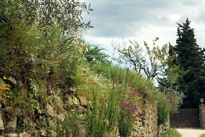 08_Tuscan Spring