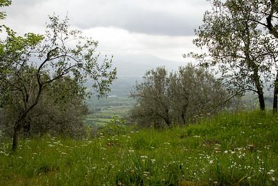 06_Tuscan Spring