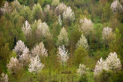 05_Tuscan Spring