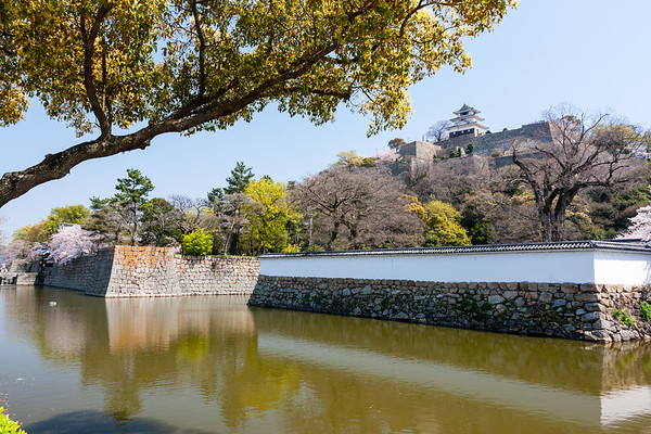 Ishigaki and dobei walls with the moat in the foreground, and the hilltop castle above.