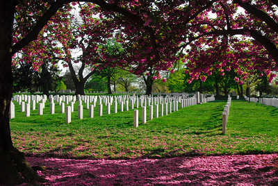Beautiful View In Arlington Cemetery