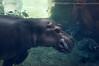 Mama Hippo-5189/17
