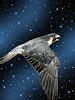 Cosmic Falcon