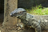 Reptile-5009/17