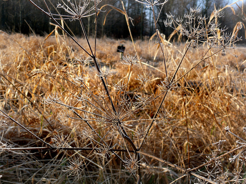 Morning Frost-181