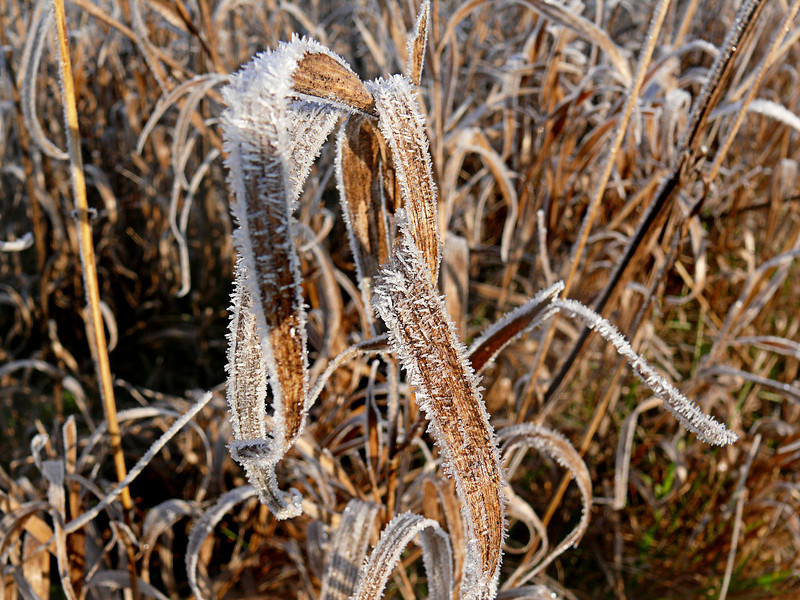 Morning Frost-154