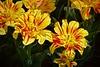 Spring Bloom-736