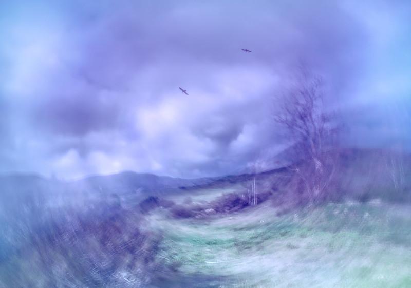 Circling Crows