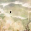Turtle Sky