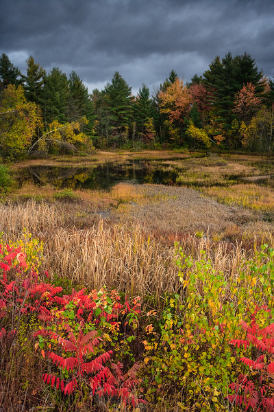 Campton Pond